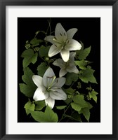 Framed White Lilies '06
