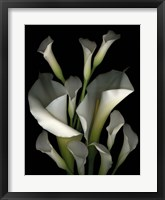 Framed White & Crystal Blue Callas 2