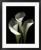 Framed White Calla 1