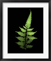 Framed Fern 3