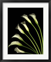 Framed Crystal Blush Calls Lily 1