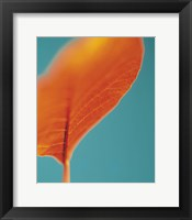 Framed Orange Leaf I