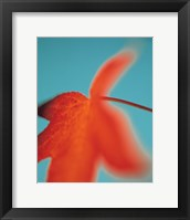 Orange Leaf II Framed Print