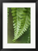 Framed Fern