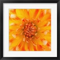 Framed Orange Glow