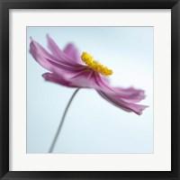 Lilac Petals II Framed Print