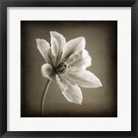Framed White on Black