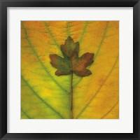 Leaf Inset Framed Print