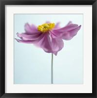 Framed Lilac Petals I