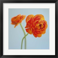 Framed Orange Delight I