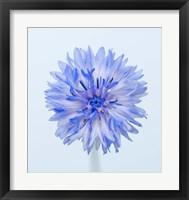 Framed Baby Blue II
