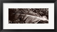Framed Feather and Shrub