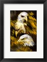 Framed Eagle Three