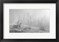 Framed Yellowstone 3