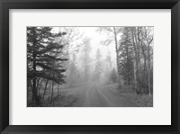 Framed Path Through Woods Black And White