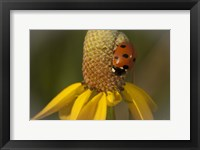 Framed Ladybug On Yellow Flower