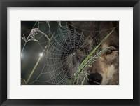 Framed Web & Wolf