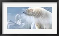 Framed Arctic Frost Bear