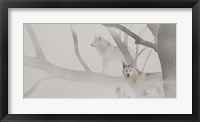 Framed White Wolves In Mist