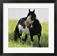 Framed Wildhorses 2