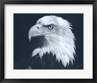 Framed Bald Eagle 3