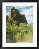 Framed Zion 5