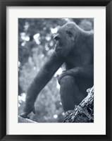Framed Gorilla 2