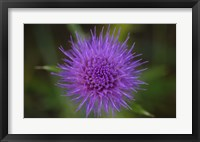 Shades Of Nature Purple Spiked Flower II Framed Print