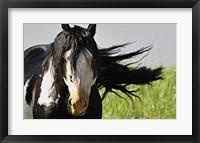 Framed Wildhorses 1