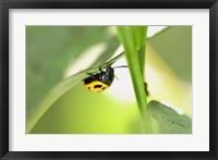 Framed Yellow And Black Ladybug