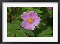 Framed North Shore Pink Flower