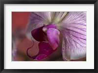 Purple And White Spotted Flower Closeup II Framed Print