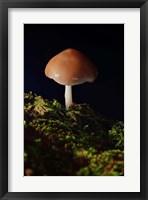 Framed Red Mushroom And Green Moss