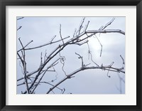 Blue Sky And Frosted Branch II Framed Print