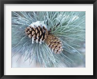 Framed Frosted Pine Cone And Pine Needles II
