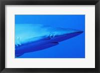 Shark Head Underwater I Framed Print
