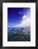 Framed Dolphin Blue Water Swim Jump