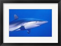 Shark Head Underwater II Framed Print