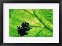 Framed Frog Silhouette On Leaf