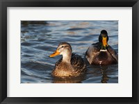 Framed Just A Duck Duo