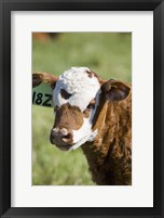 Cow Tag I Framed Print