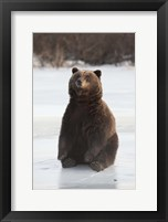 Framed Bear Taking A Seat