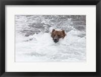 Framed Bear Wading