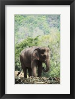 Framed Elephant In The Light