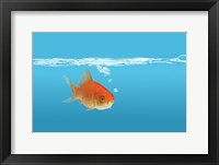 Framed Goldfish In Thought