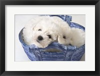 Framed White Puppy In Blue Basket