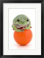 Framed Green Frog Orange Golf Ball II
