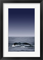 Framed Dolphin Tail Blue Sea