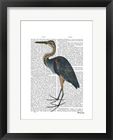 Blue Heron 3 Framed Print