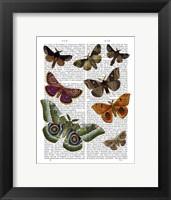 Moth Plate 2 Framed Print